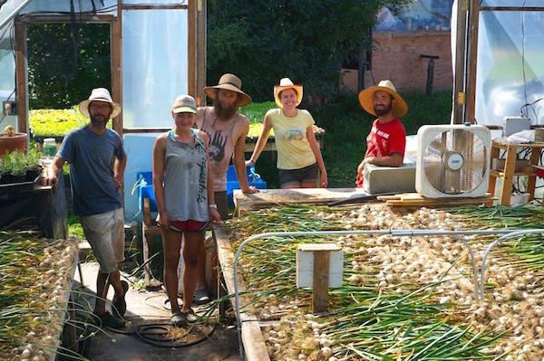 Team Garlic! / La belle équipe de de récolte d'ail